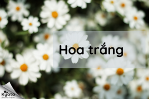 Nhóm hương hoa trắng